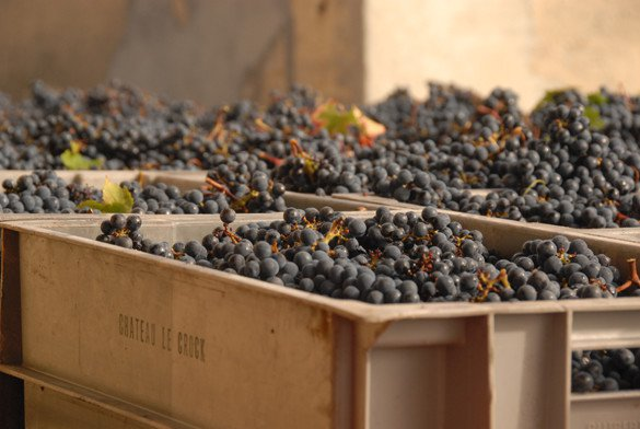 Photo of crates filled with grapes at Château Le Crock
